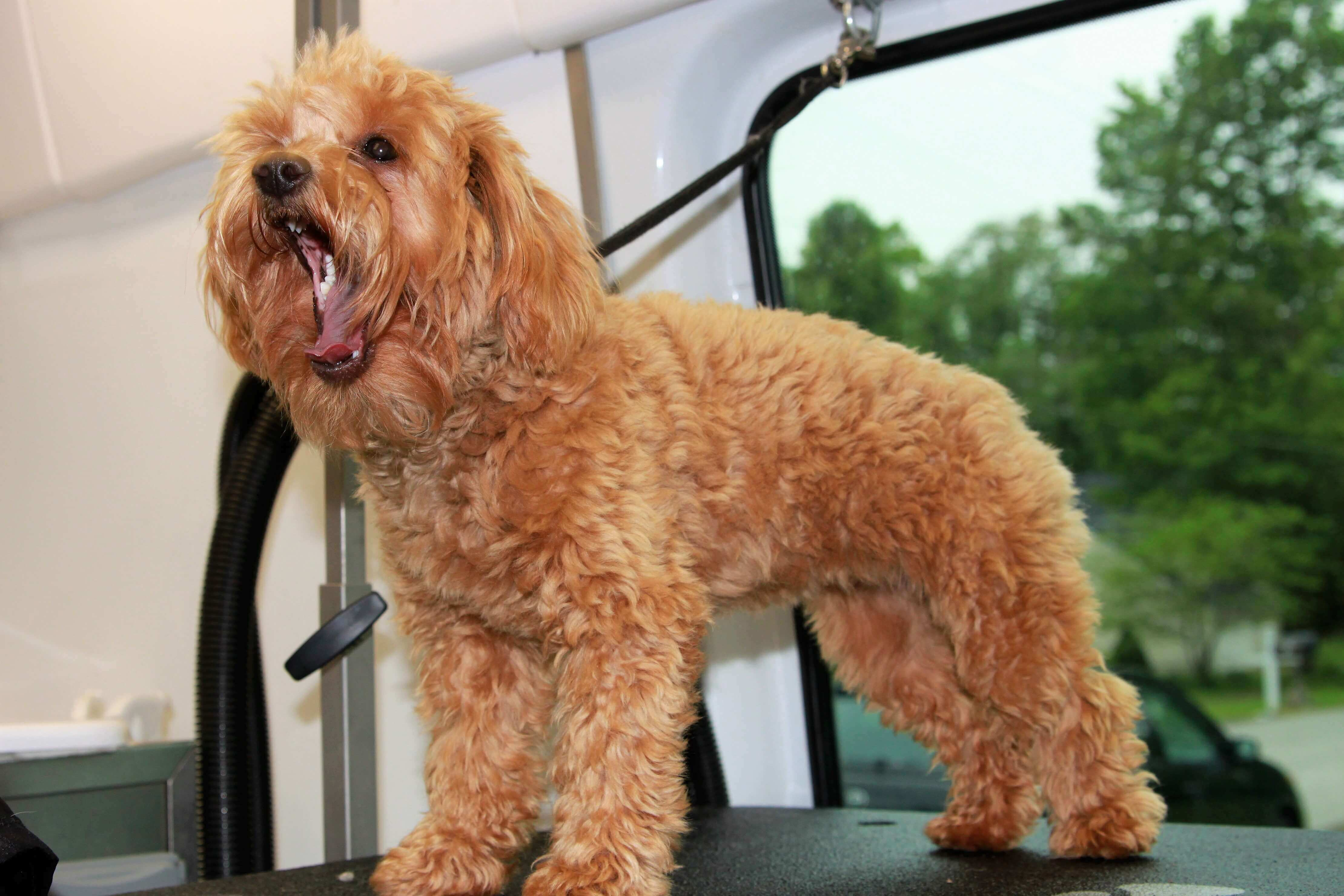 Mobile Dog Grooming Aurora