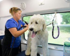 Dog Getting Haircut