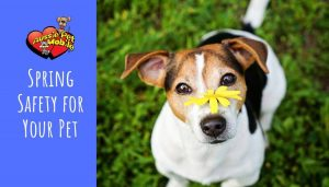 Spring Safety for Your Pet